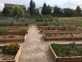 Coyote Ridge Learning Garden 2